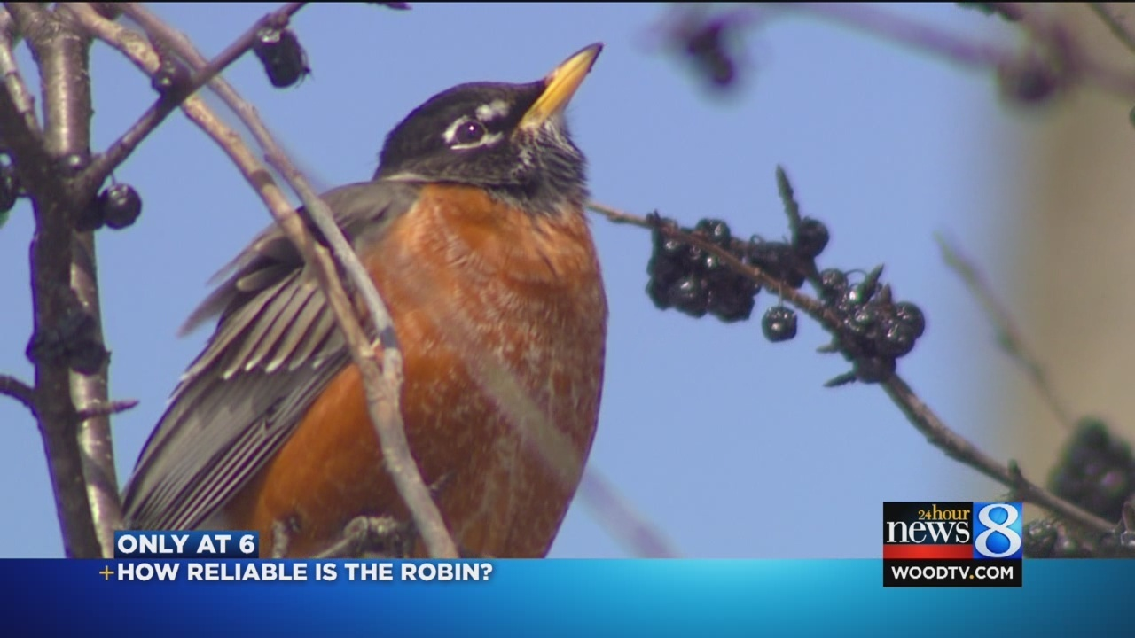 Do Robin Sightings Mean Spring Is Near