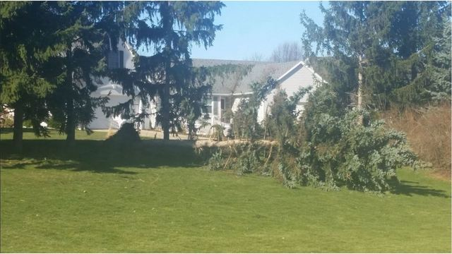 Tree down Brookmeadow Apartments in Grandville Jeff Sytsma via FB 030817_301840