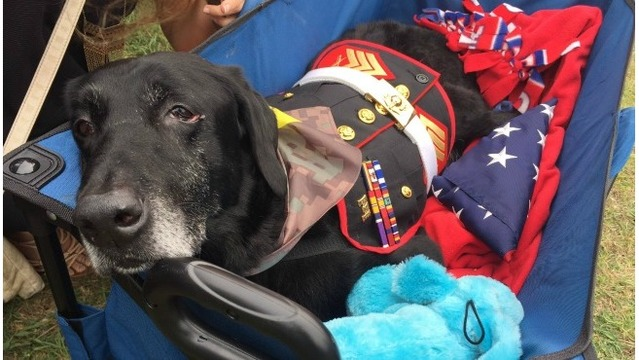 Military dog exhibit finished in time for Cena's funeral