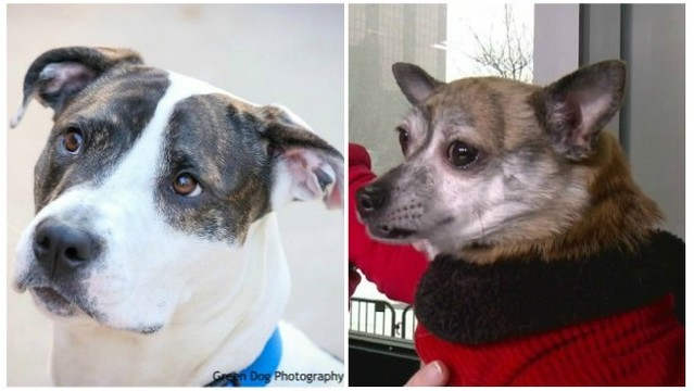KCAS Pets of the Week: Vallie and Rocco