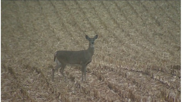 Chronic wasting disease detected in Montcalm County
