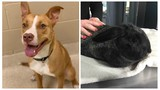 KCAS Pets of the Week: Greenly and Thumper