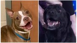 KCAS Pets of the Week: Berry and Drake
