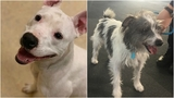 KCAS Pets of the Week: Champagne and Leo